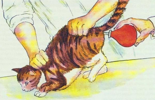 Клизма вазелиновым маслом кошке