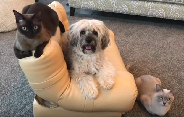 Бурма с собакой