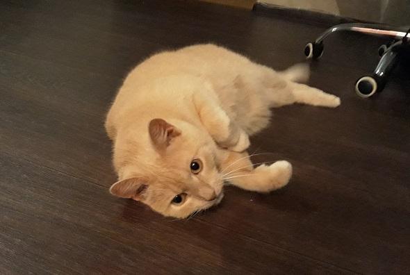 Бешенство у кота