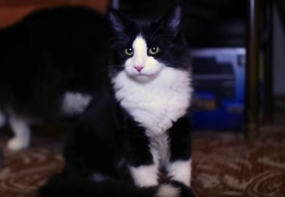 Норвег кот