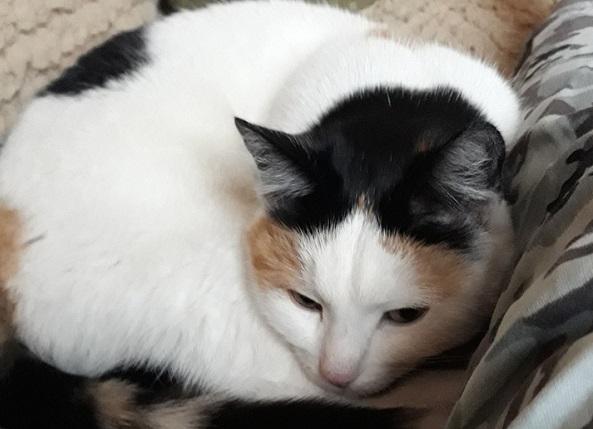 Методы какими кошки лечат людей