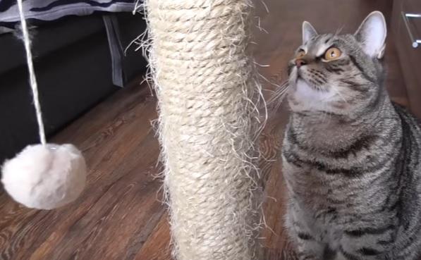чение кота к когтеточке