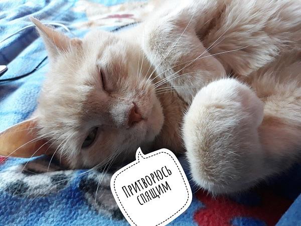 Кот кастрат метит