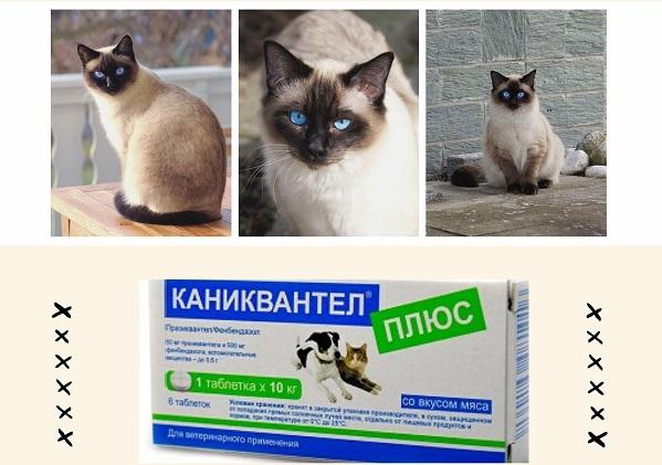 Каниквантел кошке от глистов