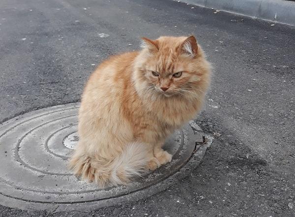 мазь от лишая для кошки