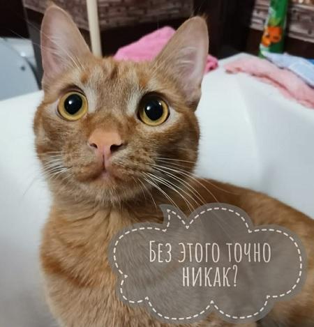 Как вызвать у кошки рвоту