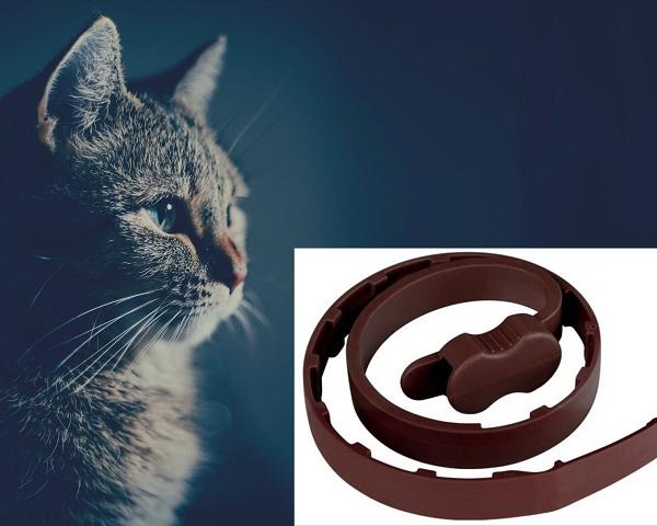 Противоблошиный ошейник для кошек