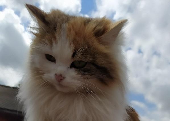 Глисты у кота