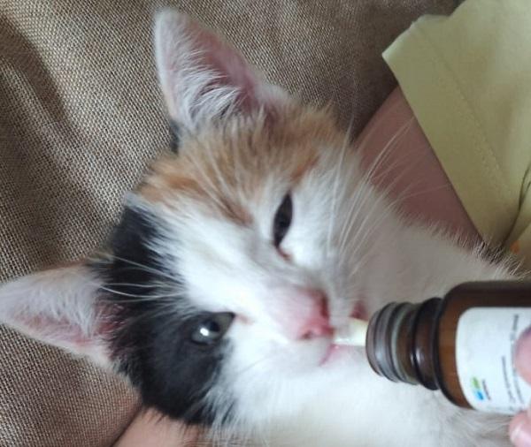 Лечение гельминтов у кошки