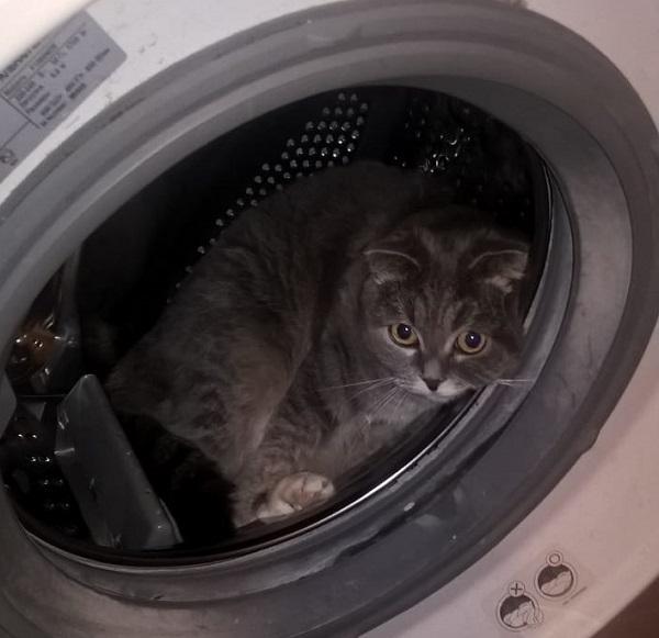 Кошечка в стиральной машине
