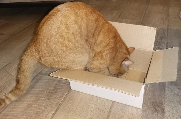 Кот залезает в коробку