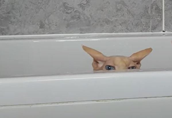 Сфинкс в ванной