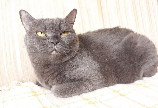 Возрастная кошка