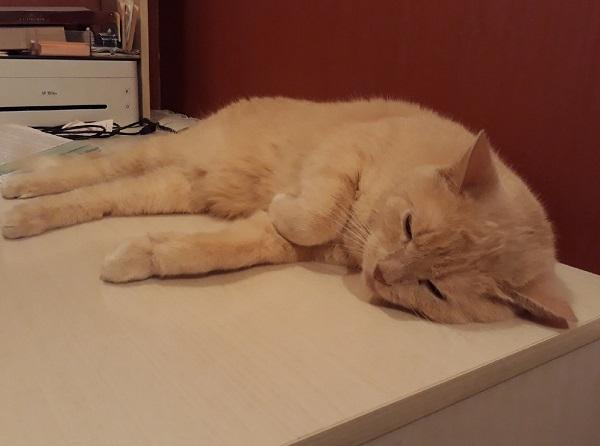 Кот любит спать на столе