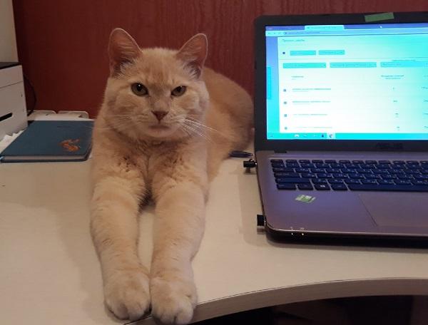 Кот на письменном столе