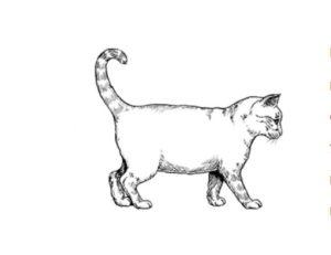 Избыточный вес кошки