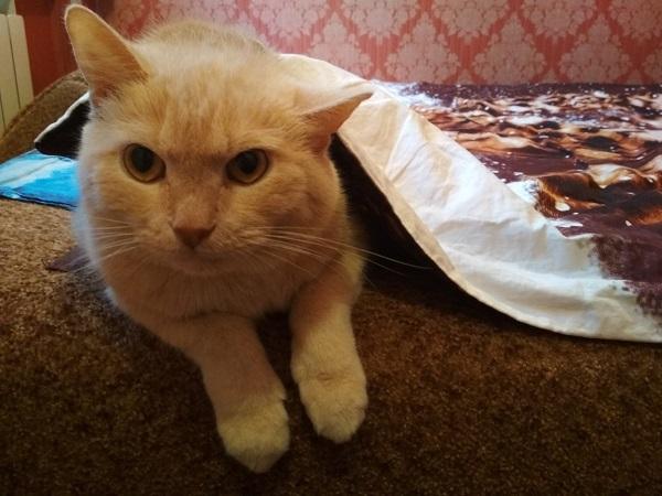 Переохлаждение у кота