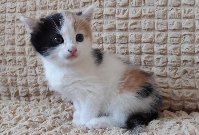определение возраста котенка