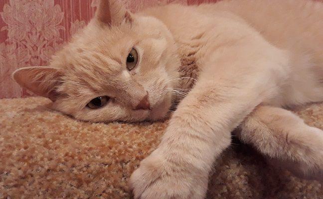 Герпесвирус у кота