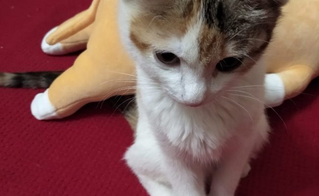 Лейкемия кошек