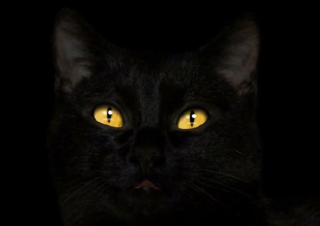 Кот колдун