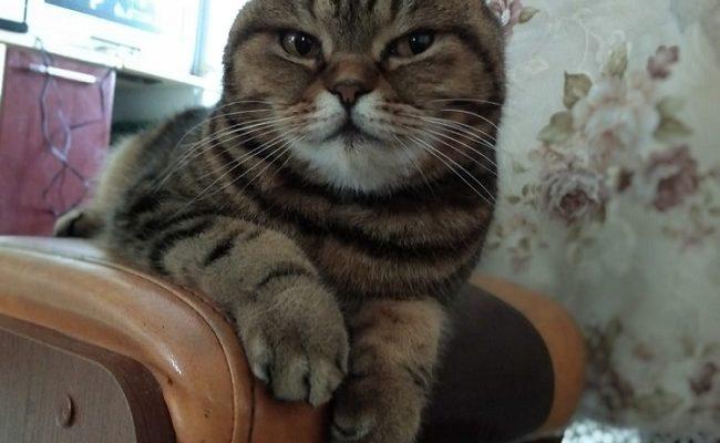 Кот постоянно чихает