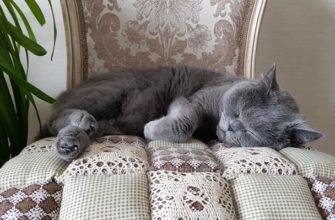 Кот дремлет