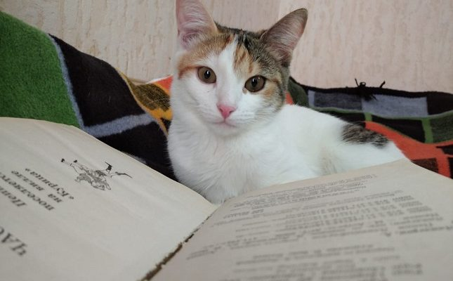 Оптимальный возраст для кастрации кошки