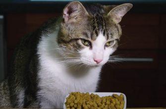 переход кошки на сухой корм