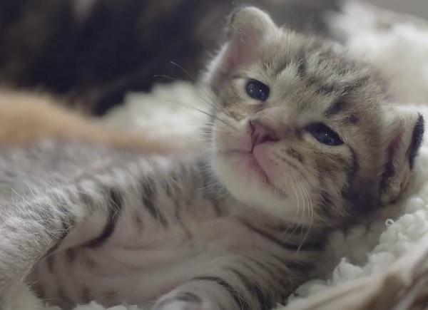 Сроки, когда котята открывают глаза