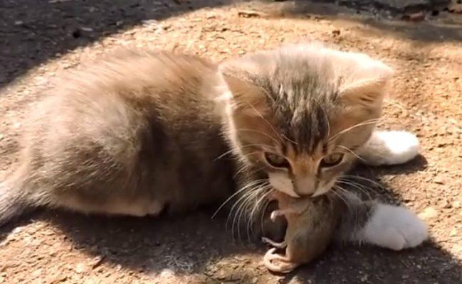 Котенок с мышкой