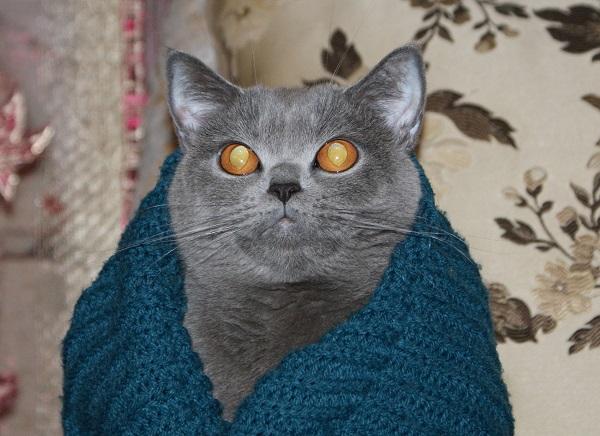Светятся глаза у кошки