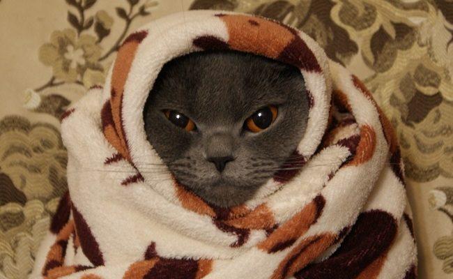 Кошка загуляла