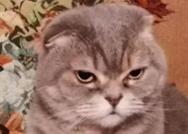 Кошка текут глаза