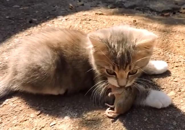 Котенок отравился