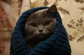 Поведение кошки после кастрации